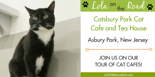 cat cafes catsbury park cat cafe and tea house lola on the road