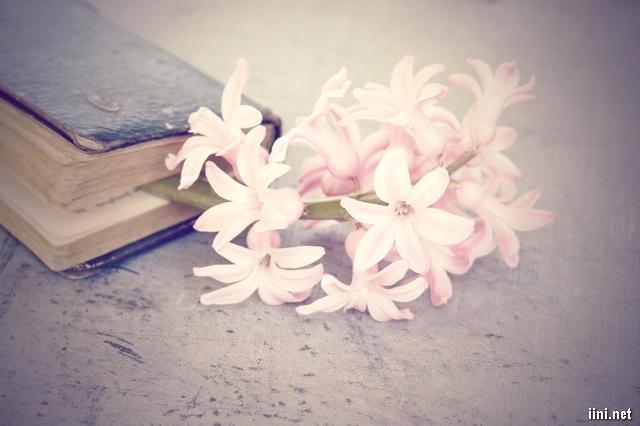 sách và hoa phong lan