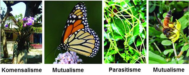 Simbiosis Makhluk Hidup