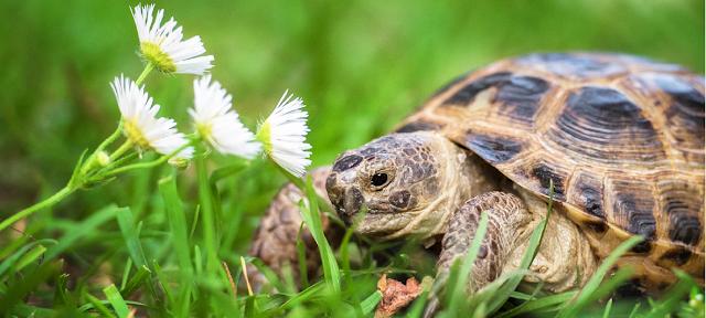żółw co trzeba