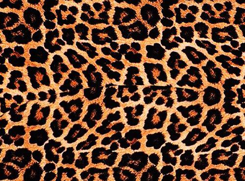Animal Para Fondo De Pantalla: Fondos De Pantallas Animal Print Guepardo