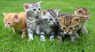 Kittens sitting in the grass outside