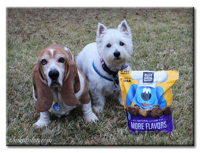 Basset Hound and Westie posing with BLue Dog Bakery dog treat bag