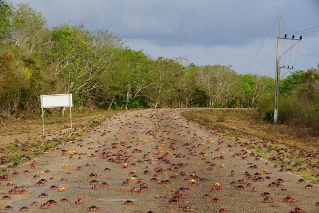 crabi-plaja-cuba