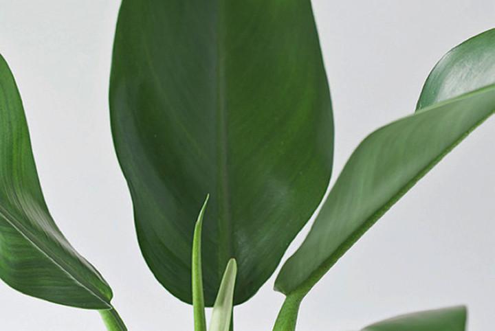 Coisas de casa e tal 22 plantas para voc cultivar em for Planta decorativa venenosa