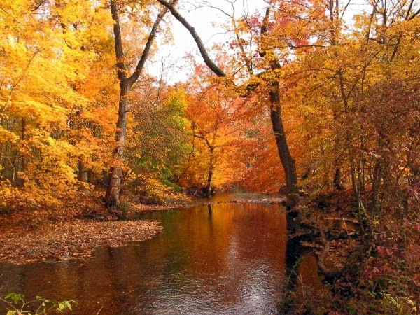 Pee Dee Arts October 26th Paint An Autumn Scene