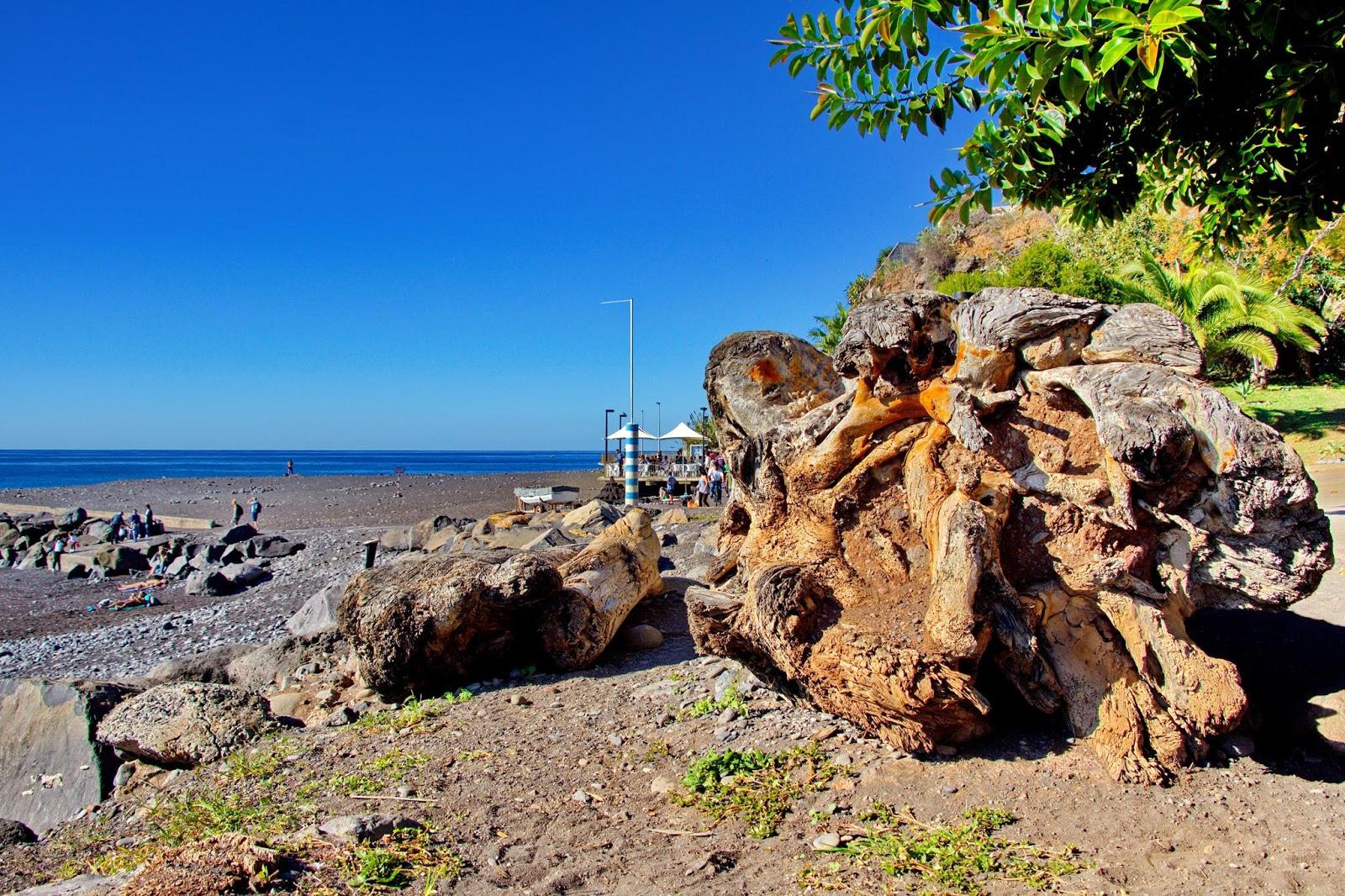 árvore na Praia Formosa