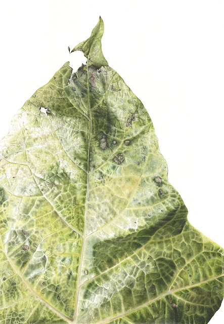 Botanical art by Jess Shepherd