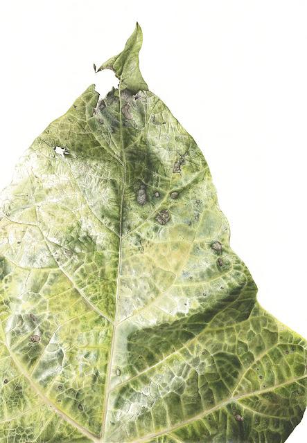 Botanical art by Jess Shepherd