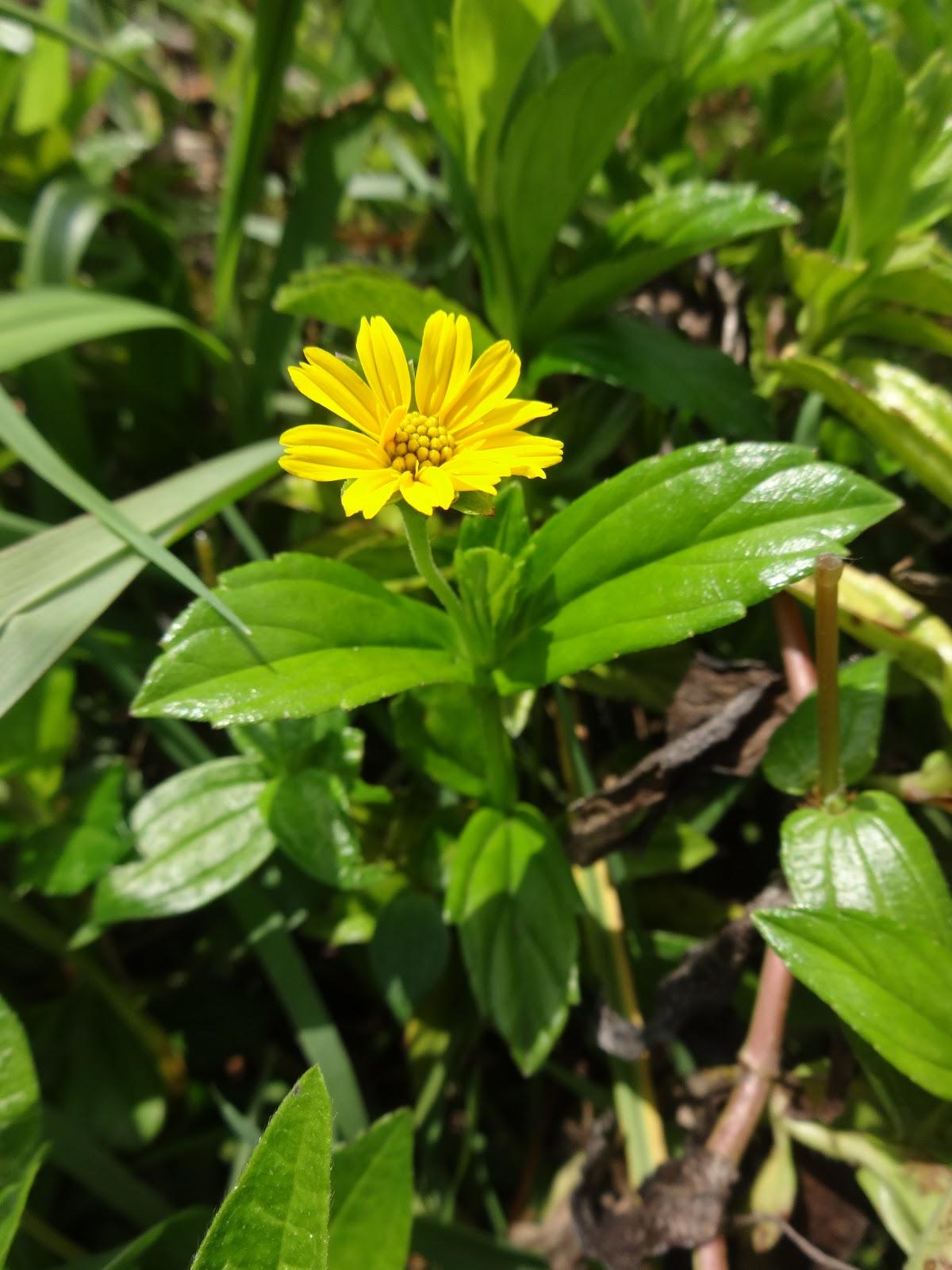 Herbs From Distant Lands Kwietnia 2018
