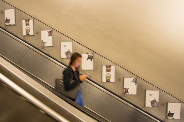 фото котов из приюта вместо рекламы на станции метро