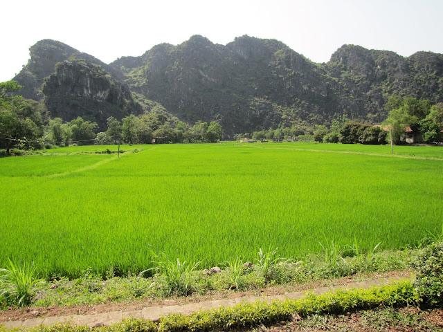 rice field ninh binh vietnam