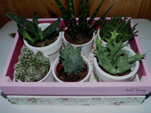 caja-fruta-plantas