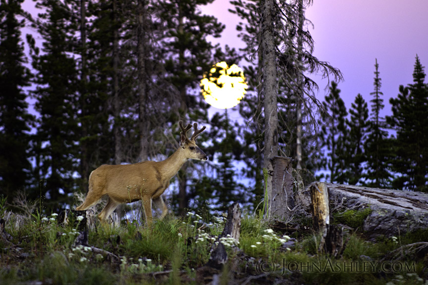 red moon phase deer hunting - photo #18