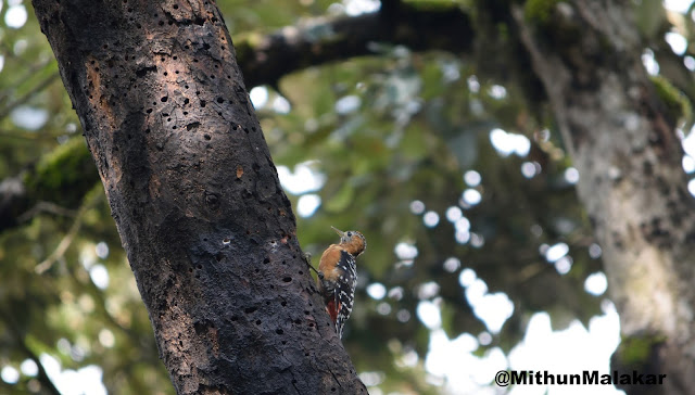 Bird Watching in Kilbury Nainital