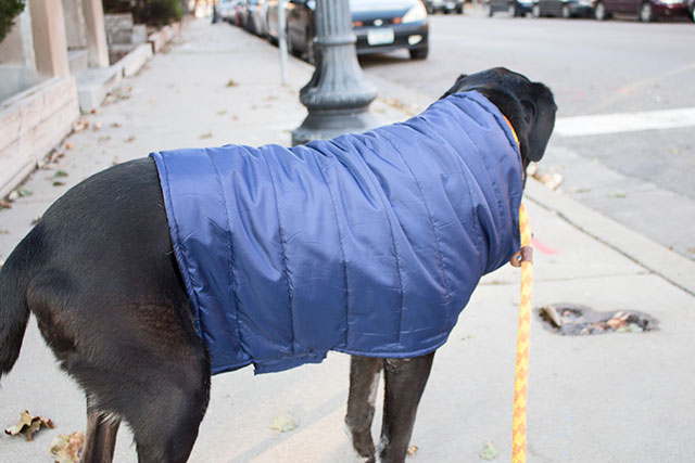 DIY dog coat from the side