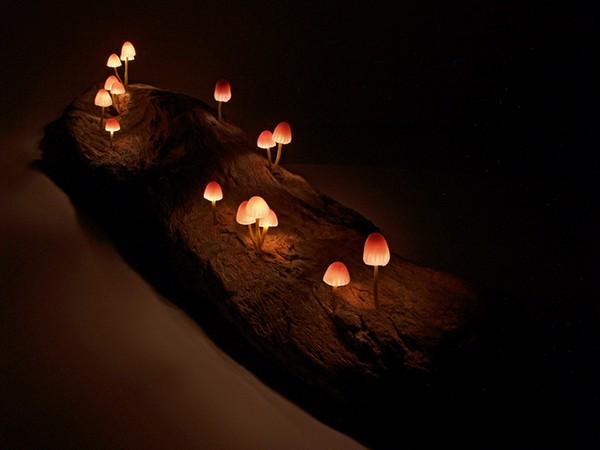 YukioTakano led lights