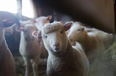 羊皮紙_作り方2