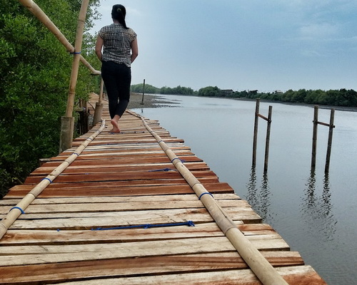 www.Tinuku.com Society built Jembatan Api-Api walkway in Congot Mangrove Forest for coastal rehabilitation closer to public