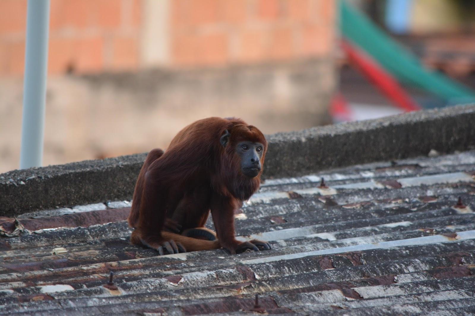 Schön Haustier Affe Beste Wahl Ich Halte Nicht Viel Davon, Junge Wildtiere