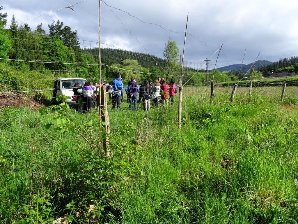 Fundaci n lurgaia fundazioa impresionante trabajo de los for Importancia de un vivero