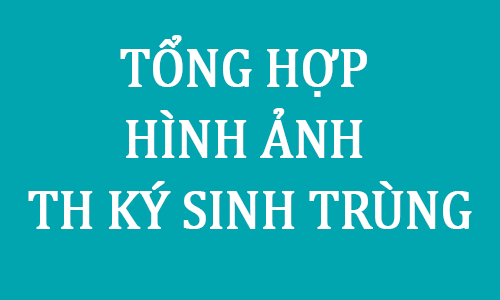Tong hop hinh anh thuc hanh ky sinh trung - Toi Hoc Y