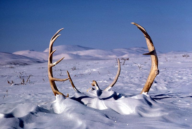 Wallpaper Hd Snow Falling Making More Things Antlers How To Get A Head
