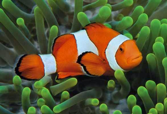 Apakah ikan juga butuh tidur?