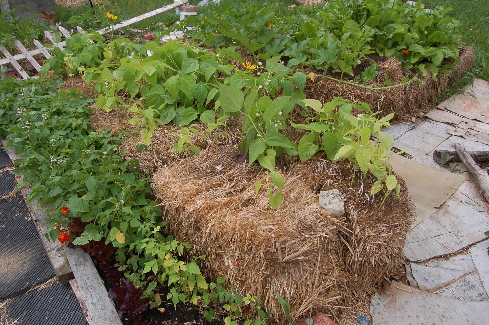 3 jardins au qu bec les succ s et les checs 2015 partie 3 - Acheter de la paille pour jardin ...