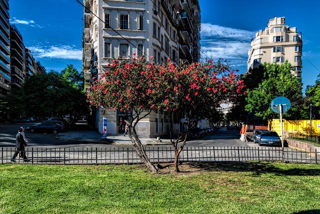 Dos arbustos en flor juntos