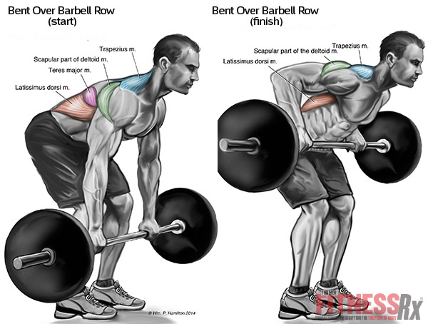 1 Bent Over Barbell Rows