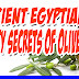 Ancient Egyptians Knew This! Learn the Beauty Secrets of Olive Oil!!