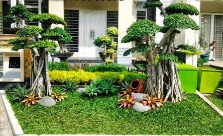 bonsai beringin korea