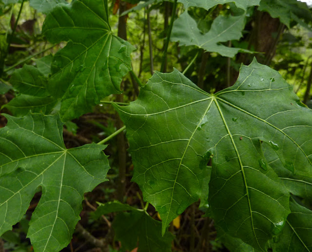 Plant Dubbed As 'God's Gift' Can Cure Up To 100 Various Diseases!