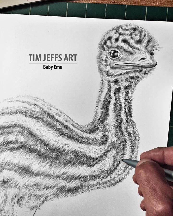 11-Baby Emu-Tim-Jeffs-www-designstack-co