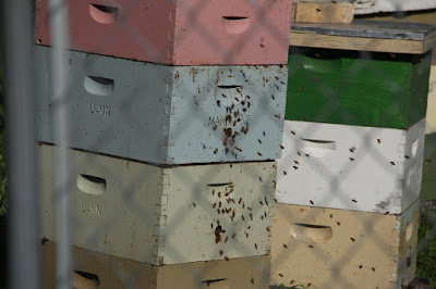 bee hives at the St. Paul campus