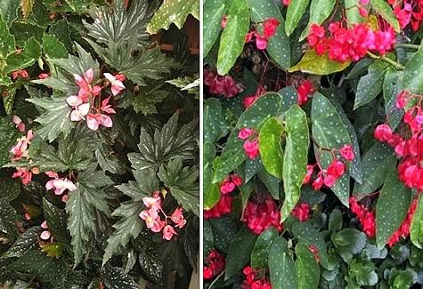 Perennes Pequenas Coleccion De Hojas Y Flores