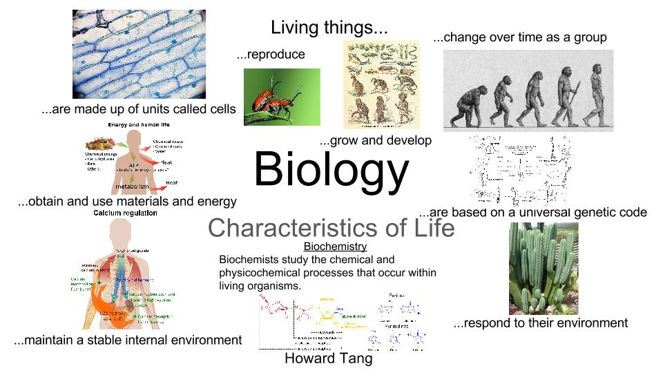 what is biology A bbc bitesize secondary school revision resource for standard grade biology  on inheritance: phenotypes, genotypes, gamete, monohybrid cross,.