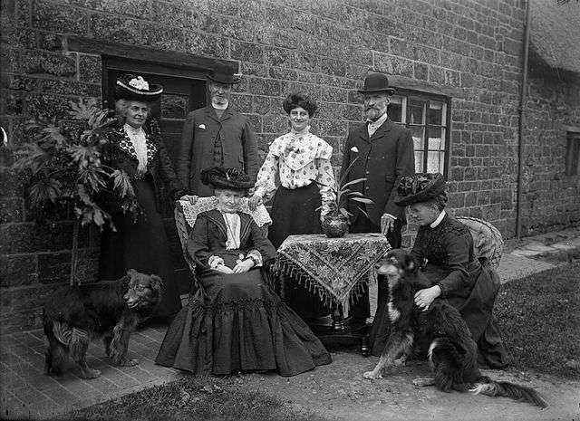 Aspidistra victorian photographs