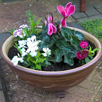 A low, round garden pot with white dianthus and a vibrant pink cyclamen flowering.
