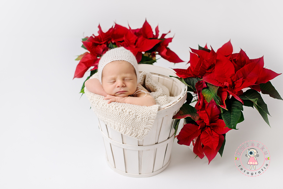 Zdjęcia maluszków w koszyku, sesja noworodkowa Kwiatku Pruszcz Gdański