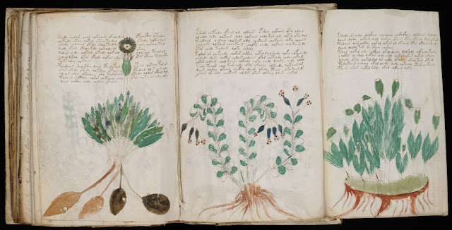 Using AI to uncover mysteries of the Voynich manuscript