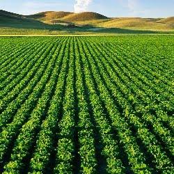 ACI Agro Solution, Jaipur