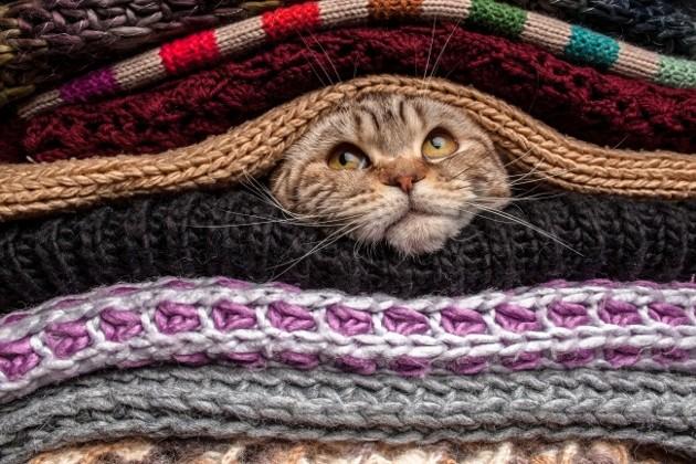 Ciri - Ciri Kamu Orang Cerdas adalah Memelihara Kucing