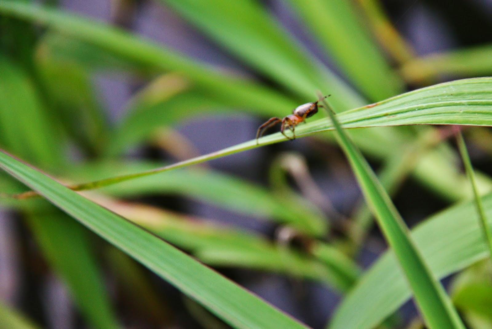 Uma formiga na selva amazônica