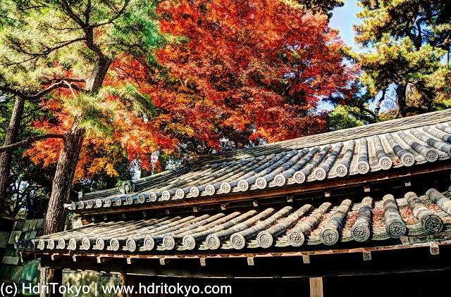 a tiled roof and red leaves of Japanese maple.