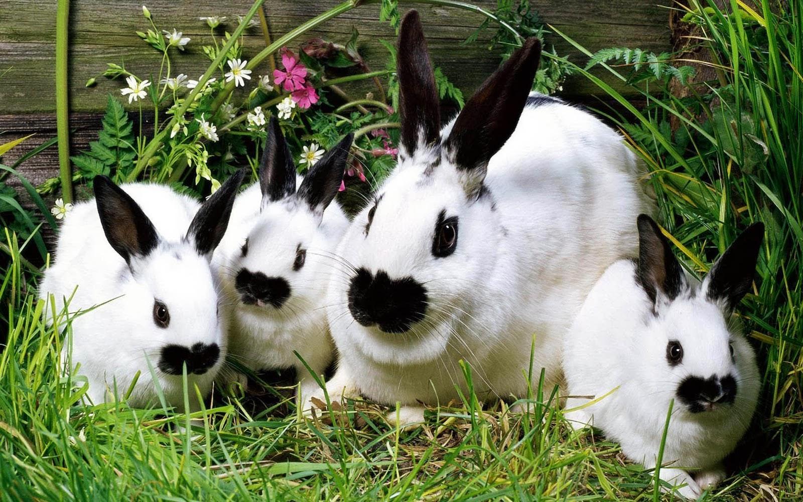 Cute White Rabbit Wallpapers For Desktop Desktop Hd Wallpapers Free Downloads Beautiful Baby