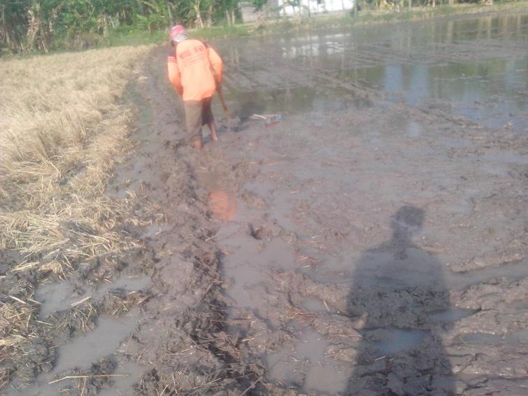 buat pembatas lahan menebar benih padi