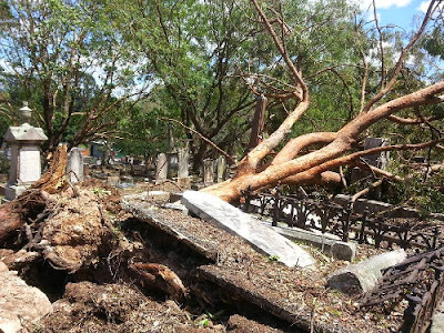 Storm damage to trees in South Brisbane Cemetery, Queensland, November 2014. (T.Olivieri)