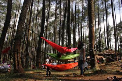 Hutan Pinus Cikole 16 PAL